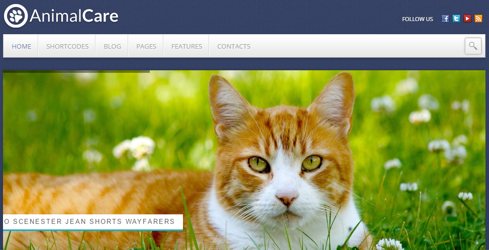 animal-care-theme-wordpress-theme-for-mecdical-theme-for-healthy-theme-for-hospital-theme-for-cilinic-theme-for-care